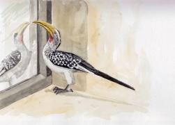 hornbill,yb.window 2