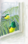 sunbird.collared.window